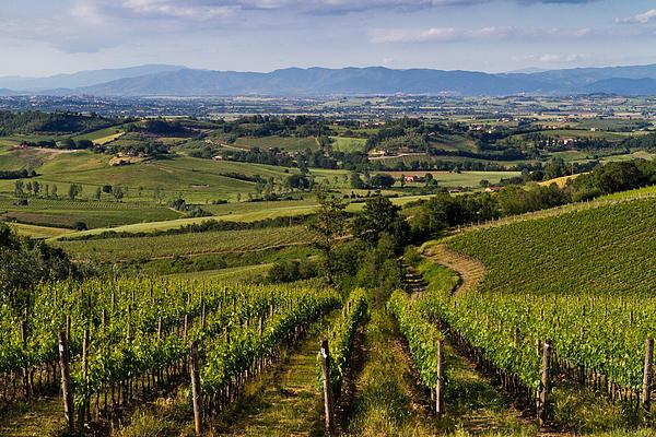 montepulciano-italy-vineyards-roger-mullenhour